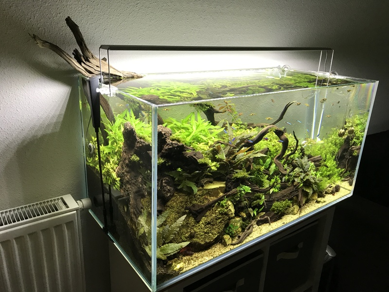 Aquarium 180L aquascapé - Page 5 Img_2613