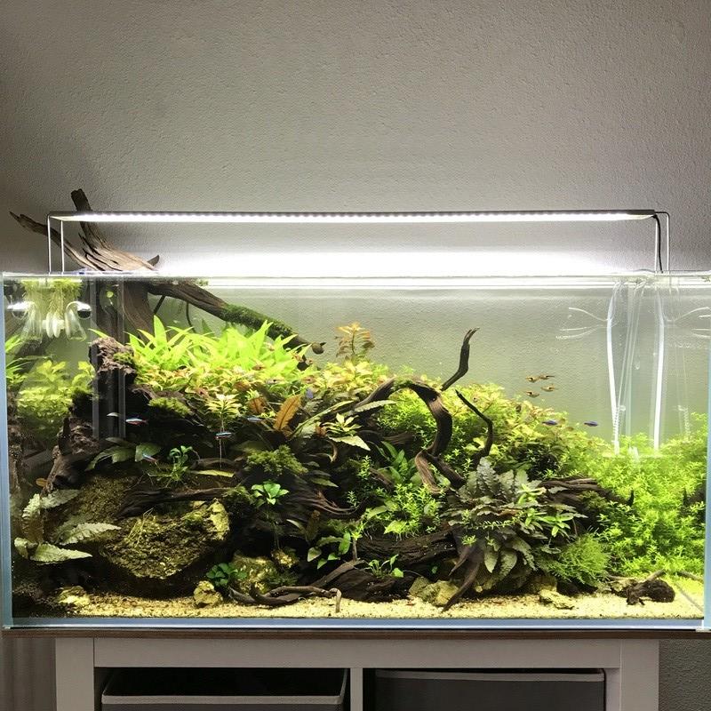 Aquarium 180L aquascapé - Page 5 Img_2810
