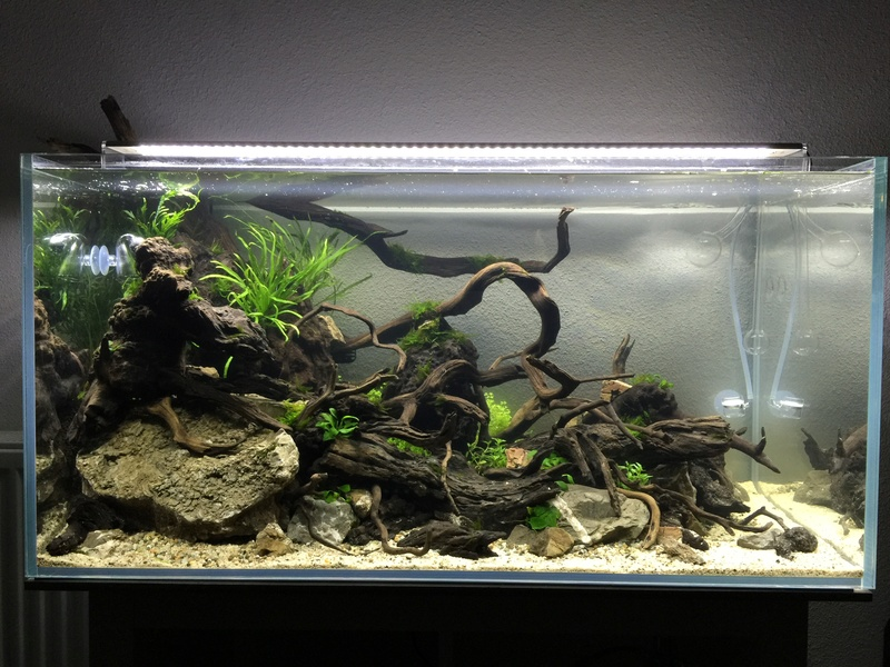 Aquarium 180L aquascapé - Page 5 Img_7110