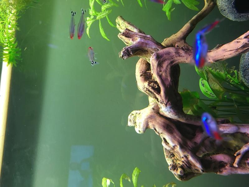 Aquarium de ilouange - Page 2 Img_0720