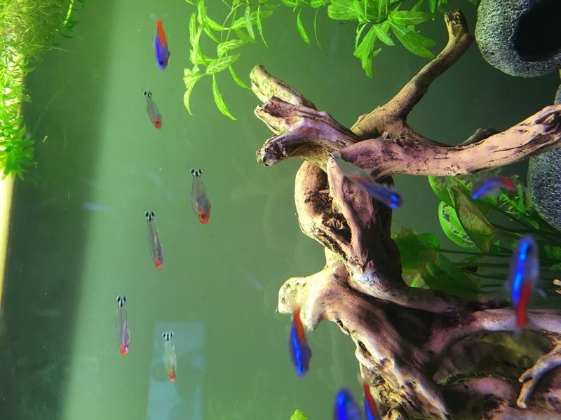 Aquarium de ilouange - Page 2 Img_0721