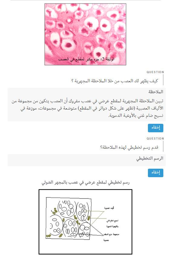 مذكرة 34: بنية العصب و الليف العصبي - علوم الطبيعة و الحياة السنة الاولى ثانوي علوم Bandi121