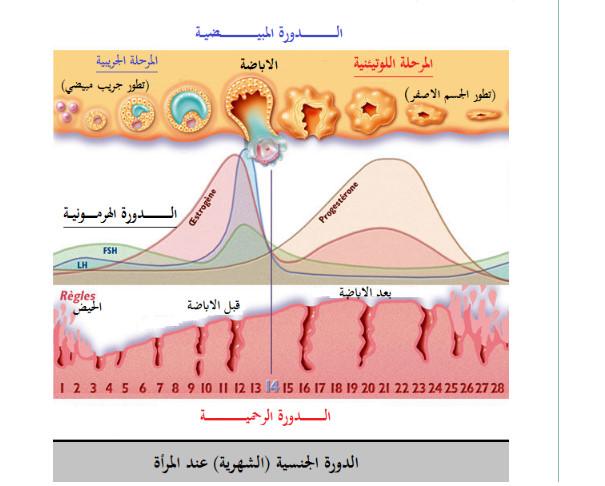 وحدة العضوية - التحكم الهرموني - مفهوم الهرمون و الغدة الصماء - علوم الطبيعة و الحياة - السنة الاولى ثانوي علوم Bandi129