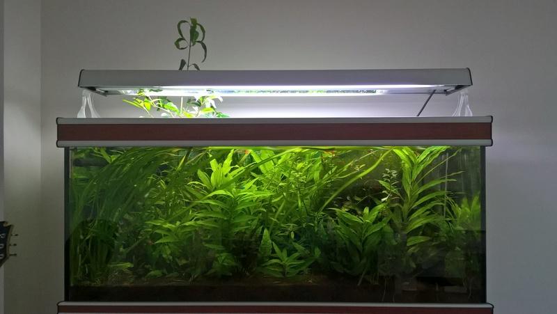 Reprise de l'aquariophilie - Démarrage d'un 180 litres Wp_20111