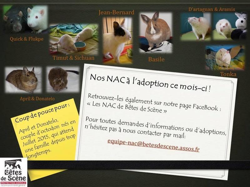 Association Bêtes de Scène recherche FA NAC 17992210
