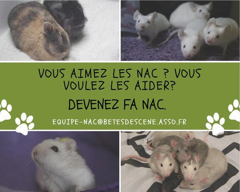Association Bêtes de Scène recherche FA NAC Visuel11
