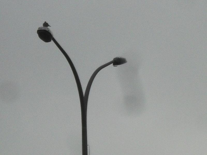 [Identifié] De l'éclairage de parking. Sdc11011