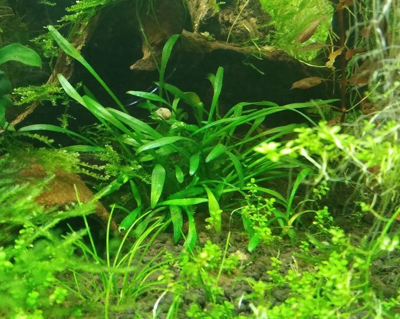Plus petite plante avec faible besoin de lumière 20170313
