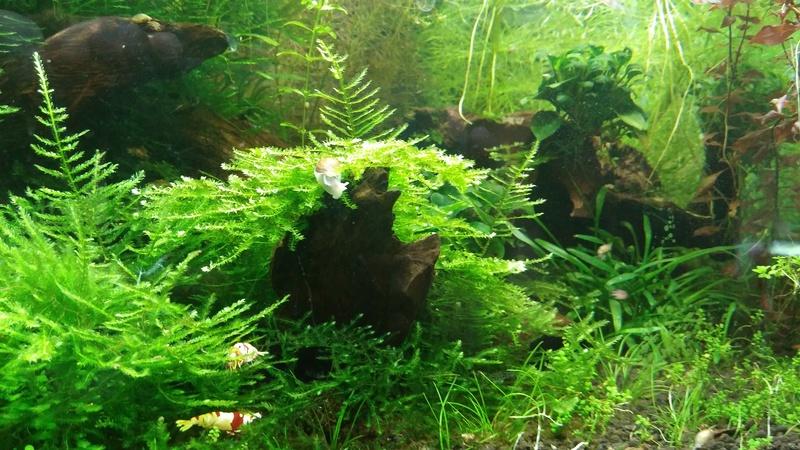 Plus petite plante avec faible besoin de lumière 20170315