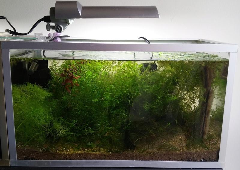 Montrez vos Aquariums 20170423