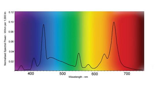 Plus petite plante avec faible besoin de lumière Spectr10