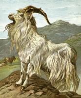 La faune de la vallée de Thrakan'raz Chyvre10