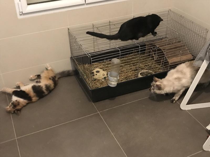 CARMEN - chat femelle, née environ septembre 2016 - PASCANI - adoptée par Sarah et Kevin (depart 57) Img_1610