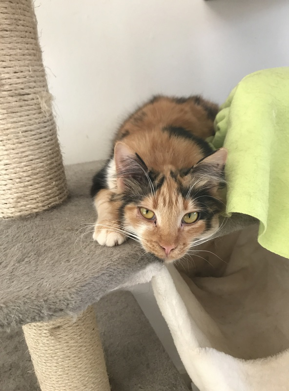 CARMEN - chat femelle, née environ septembre 2016 - PASCANI - adoptée par Sarah et Kevin (depart 57) Img_1714