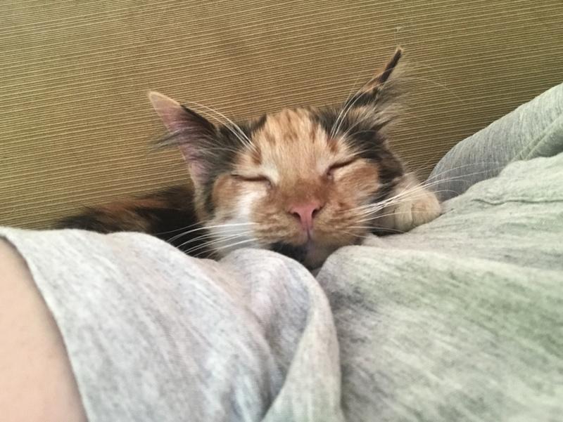 CARMEN - chat femelle, née environ septembre 2016 - PASCANI - adoptée par Sarah et Kevin (depart 57) Img_1811