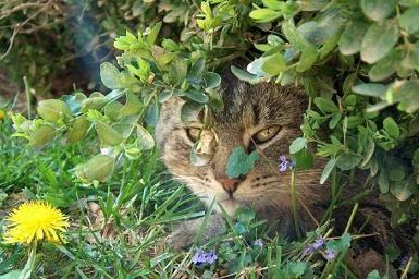 Martín y el gato de los rosales Gato_e10