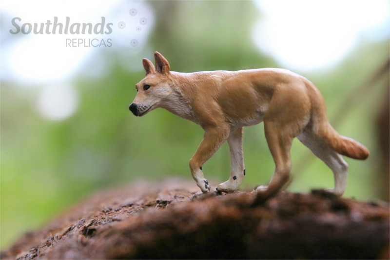 Southlands Replicas - Page 7 Dingo_10