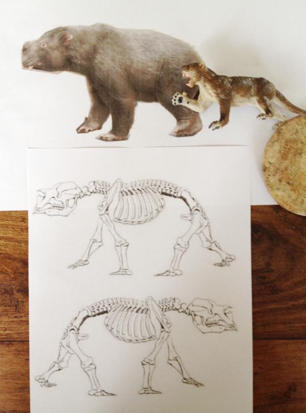Diprotodon Project Diprot10
