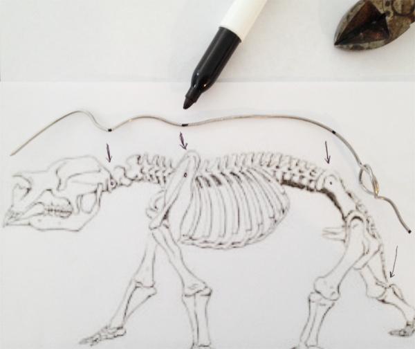 Diprotodon Project Diprot11