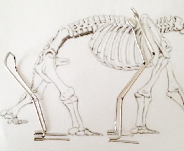 Diprotodon Project Diprot15