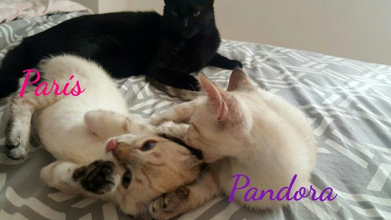 PANDORA - ES  Img-2151
