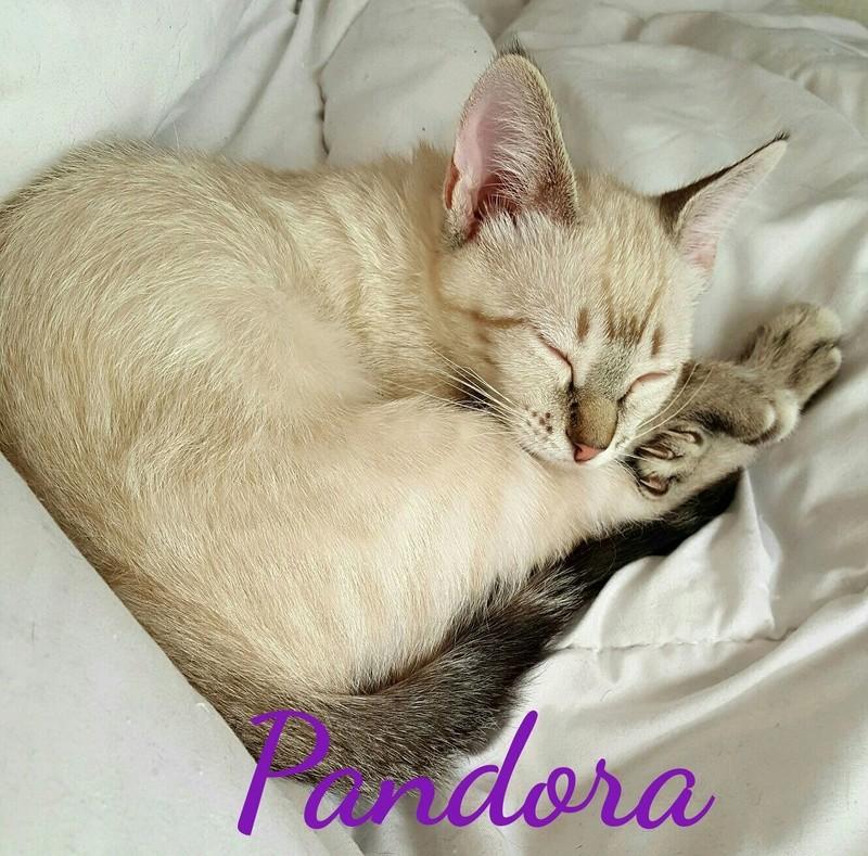 PANDORA - ES  Img-2167