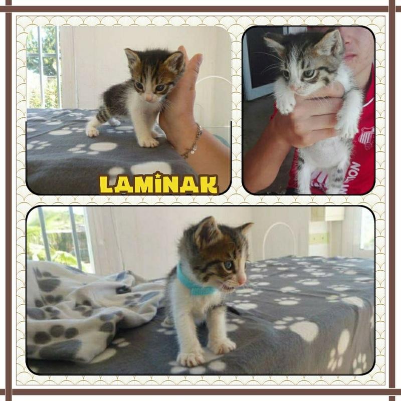 [A RESERVER] LAMINAK - TIGRE ET BLANC - EN FA Img_1312