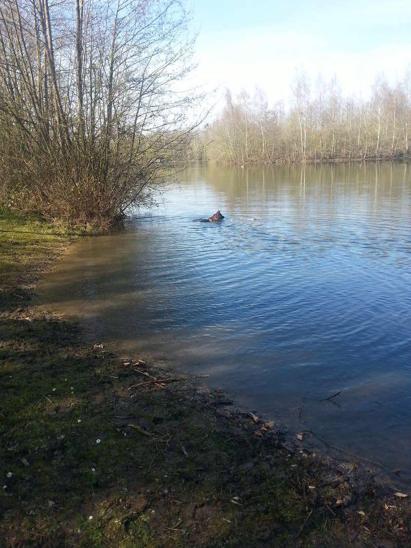 Dogs in the water Didi_b10