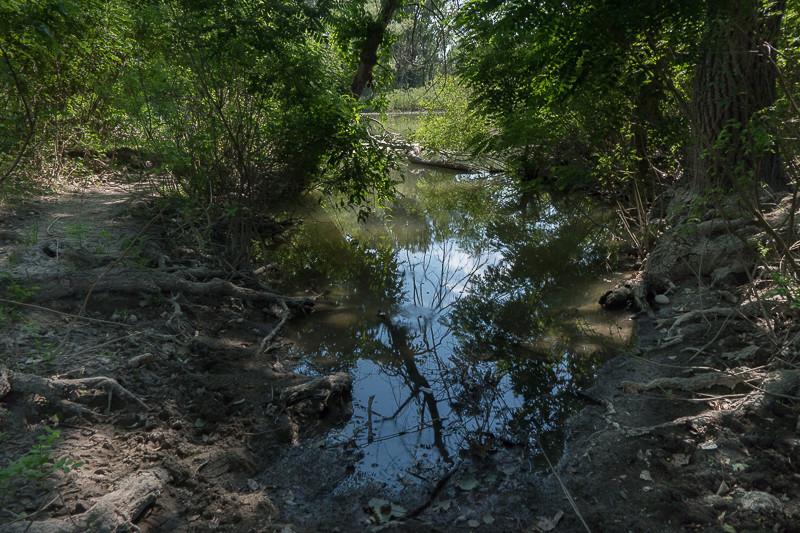 des racines et de l'eau Lamia-10