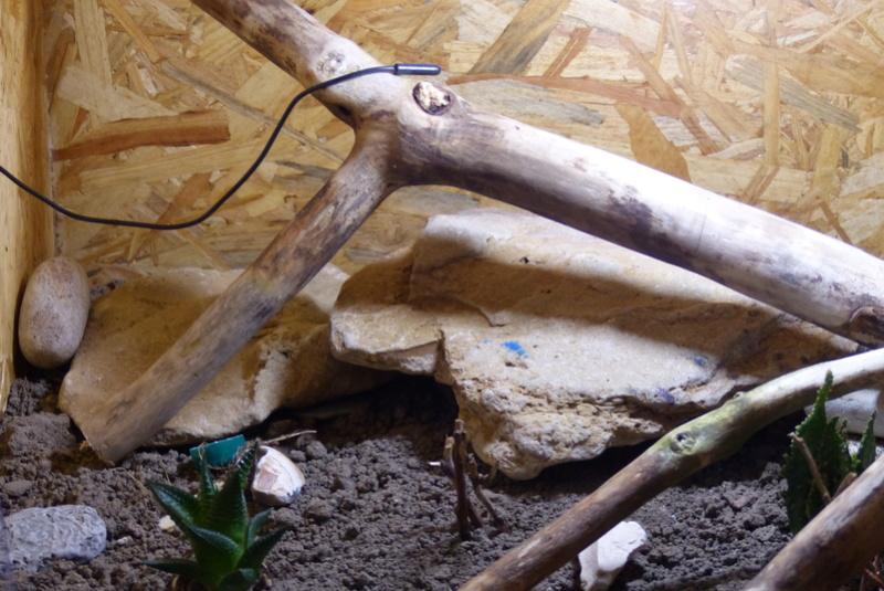 Mes Geckos Leopard - Page 5 P1050617