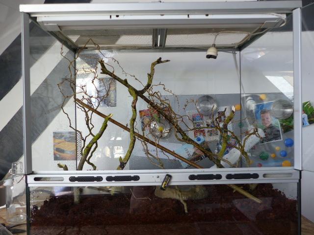Terrarium de ma Mantes (superbe affaire) P1060010
