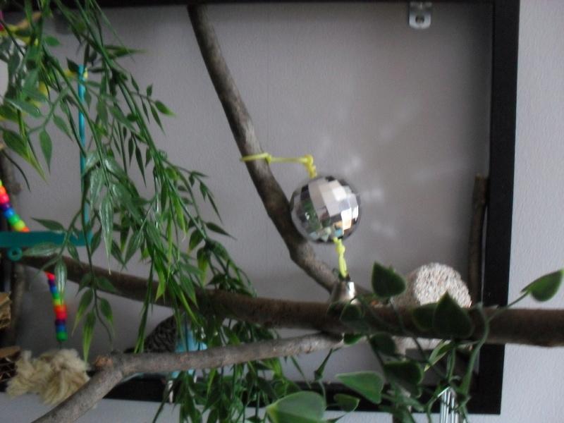 Zone De Jeu Pour Oiseaux Sdc13418