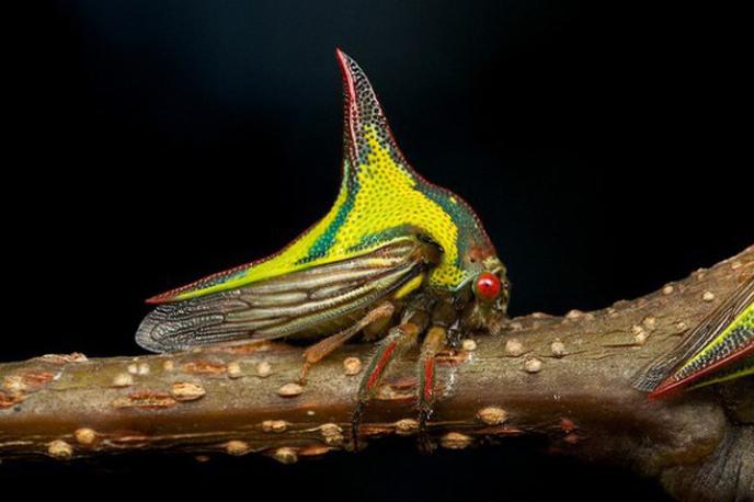 Le monde merveilleux des insectes - Page 2 12-tho10