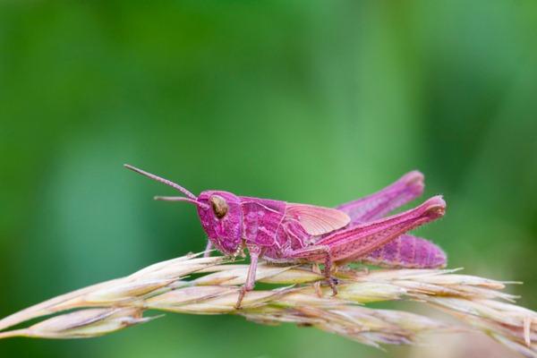Le monde merveilleux des insectes - Page 2 Rare-g10