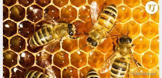 Le monde merveilleux des insectes Ruche10