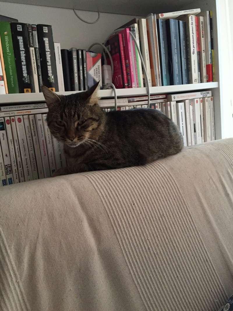 Lenny, mâle type européen tigré né le 1er juin 2015 - Page 4 Image410