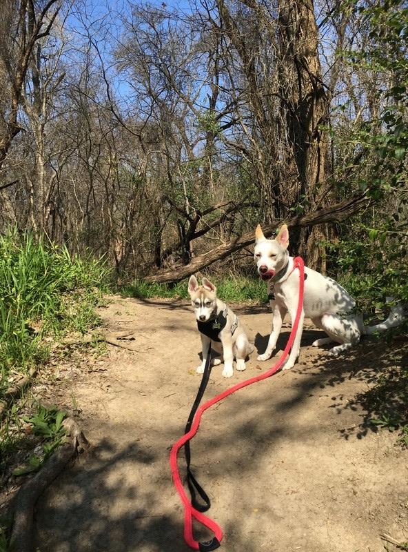 Koda's First Hike! Img_7910