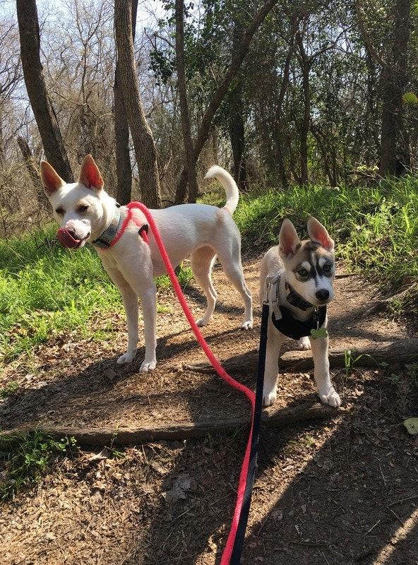 Koda's First Hike! Img_8012