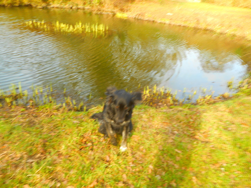 Stella, une amour de chienne très tétue ! - Page 2 Balade12