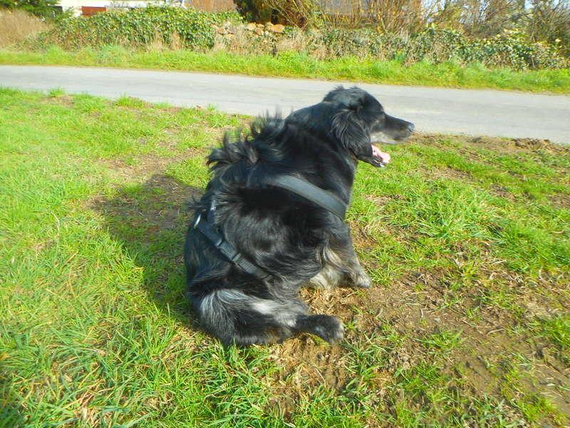 Stella, une amour de chienne très tétue ! - Page 2 Balade15