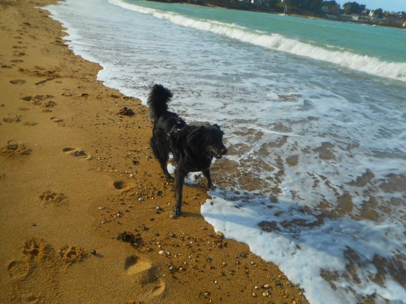 Stella, une amour de chienne très tétue ! - Page 2 Balade20