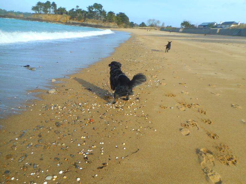 Stella, une amour de chienne très tétue ! - Page 2 Balade23