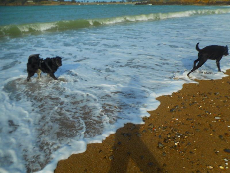 Stella, une amour de chienne très tétue ! - Page 2 Balade25