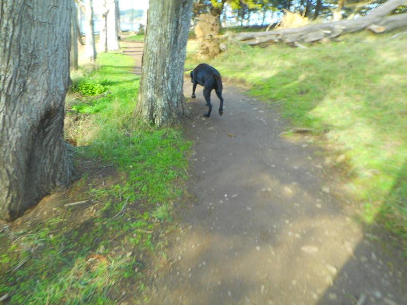 Stella, une amour de chienne très tétue ! - Page 2 Balade34