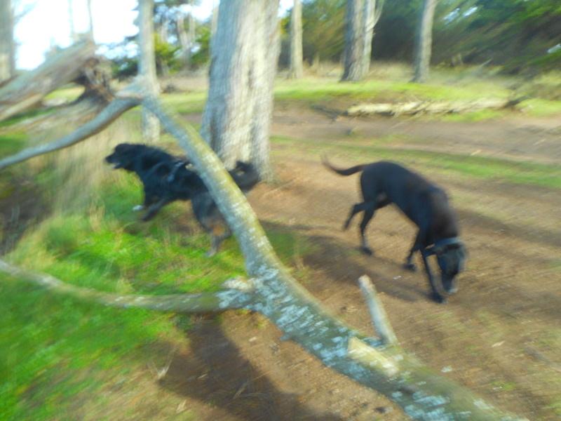 Stella, une amour de chienne très tétue ! - Page 2 Balade39