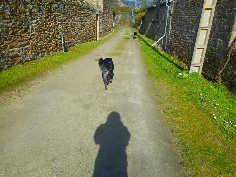 Stella, une amour de chienne très tétue ! - Page 2 Balade46