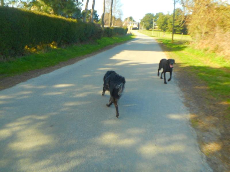 Stella, une amour de chienne très tétue ! - Page 2 Balade50