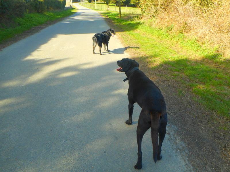 Stella, une amour de chienne très tétue ! - Page 2 Balade52