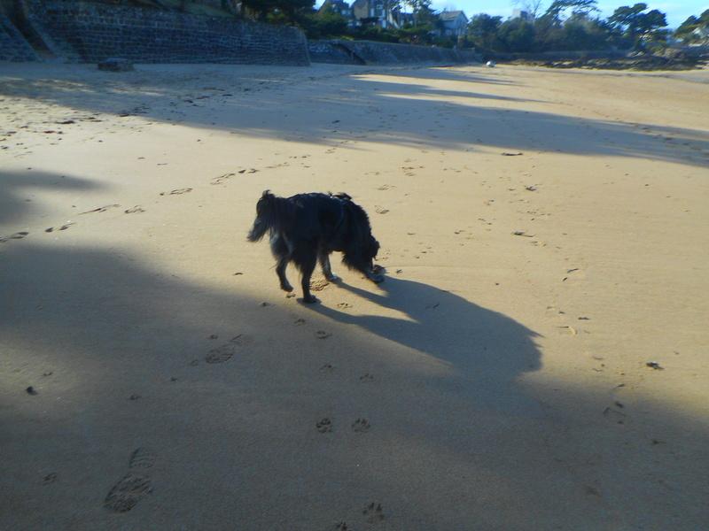 Stella, une amour de chienne très tétue ! - Page 2 Balade53