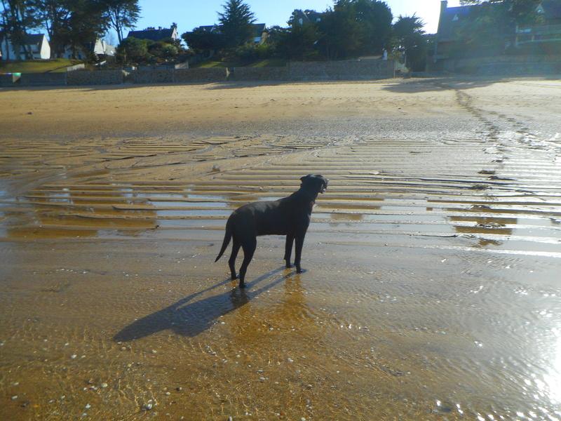 Stella, une amour de chienne très tétue ! - Page 2 Balade62
